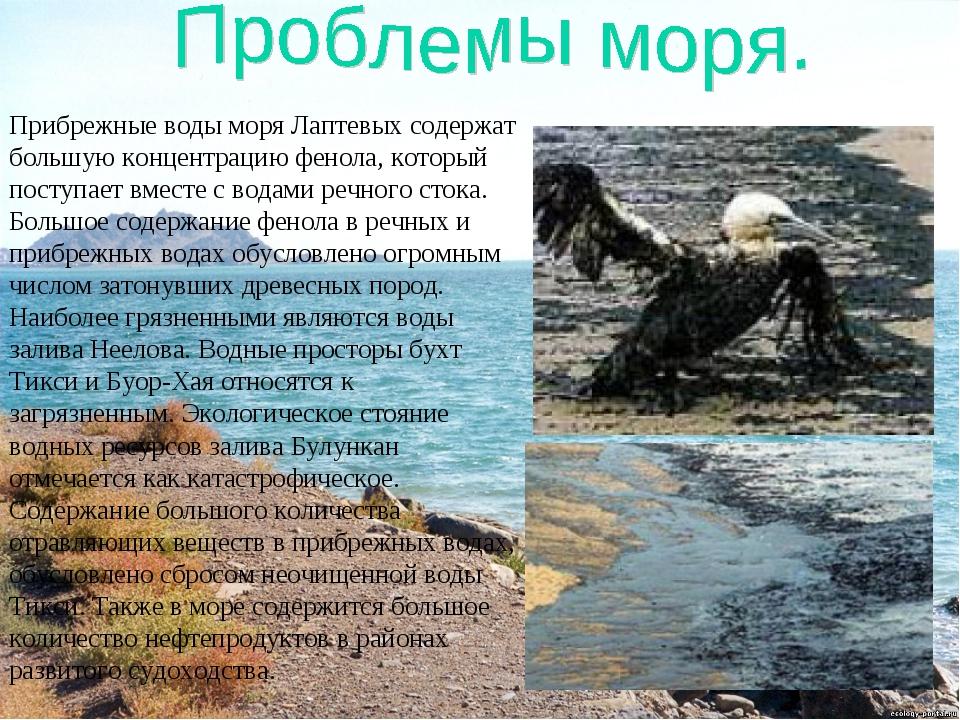 Прибрежные воды моря Лаптевых содержат большую концентрацию фенола, который п...