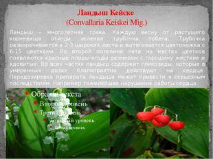 Ландыш Кейске (Convallaria Keiskei Mig.) Ландыш – многолетняя трава. Каждую в