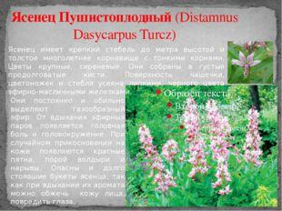 Ясенец Пушистоплодный (Distamnus Dasycarpus Turcz) Ясенец имеет крепкий стебе