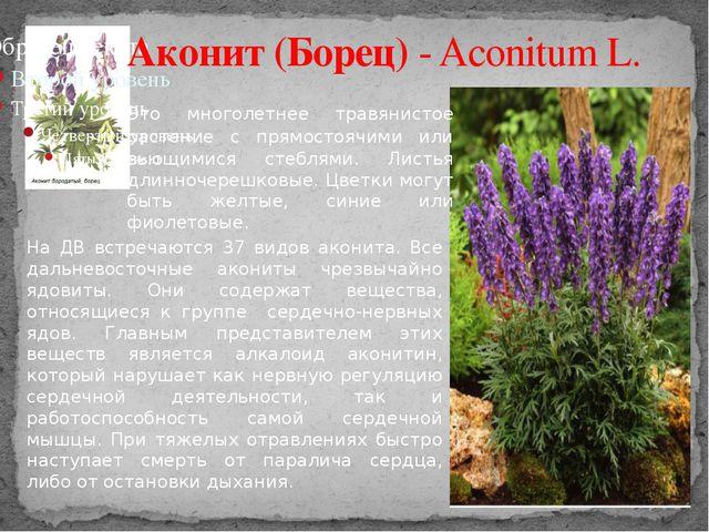 Аконит (Борец) - Aconitum L. Это многолетнее травянистое растение с прямостоя...