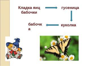 Кладка яиц бабочки гусеница куколка бабочка