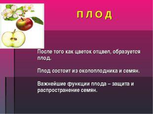 П Л О Д После того как цветок отцвел, образуется плод. Плод состоит из околоп