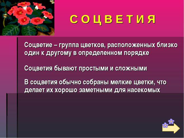 С О Ц В Е Т И Я Соцветие – группа цветков, расположенных близко один к другом...