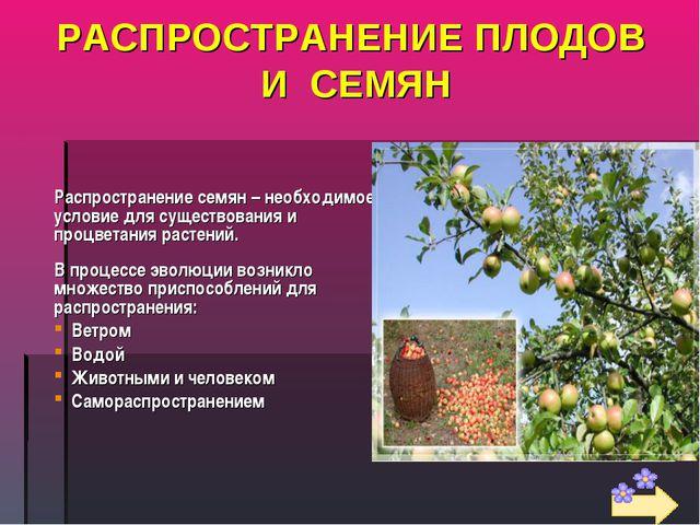 РАСПРОСТРАНЕНИЕ ПЛОДОВ И СЕМЯН Распространение семян – необходимое условие дл...