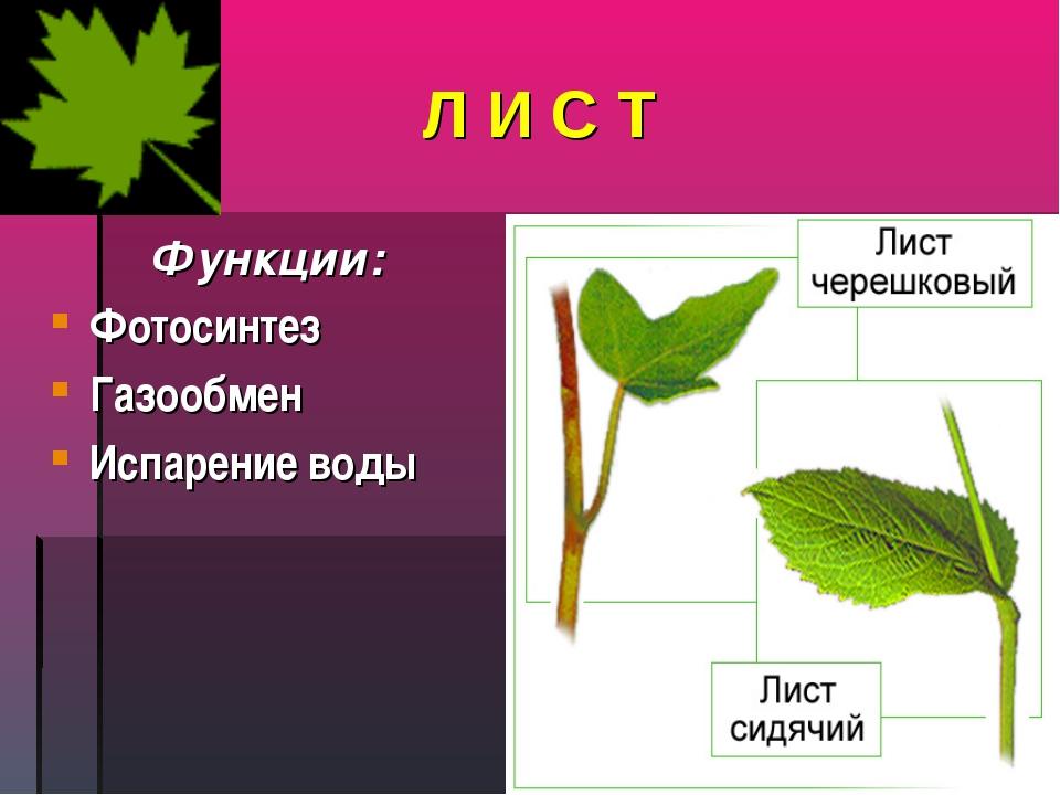 Л И С Т Функции: Фотосинтез Газообмен Испарение воды