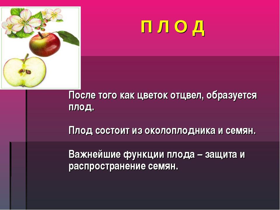 П Л О Д После того как цветок отцвел, образуется плод. Плод состоит из околоп...
