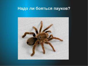 Надо ли бояться пауков?