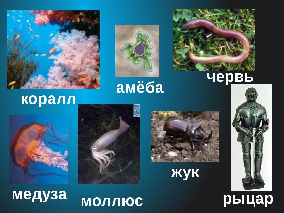 медуза червь моллюск амёба коралл жук рыцарь