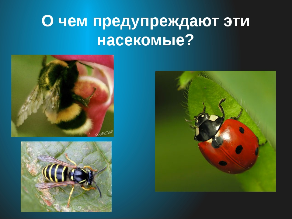 О чем предупреждают эти насекомые?