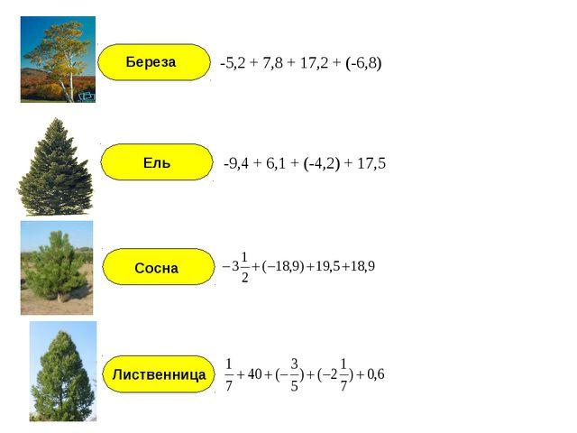 -5,2 + 7,8 + 17,2 + (-6,8) -9,4 + 6,1 + (-4,2) + 17,5 Береза Ель Сосна Листве...