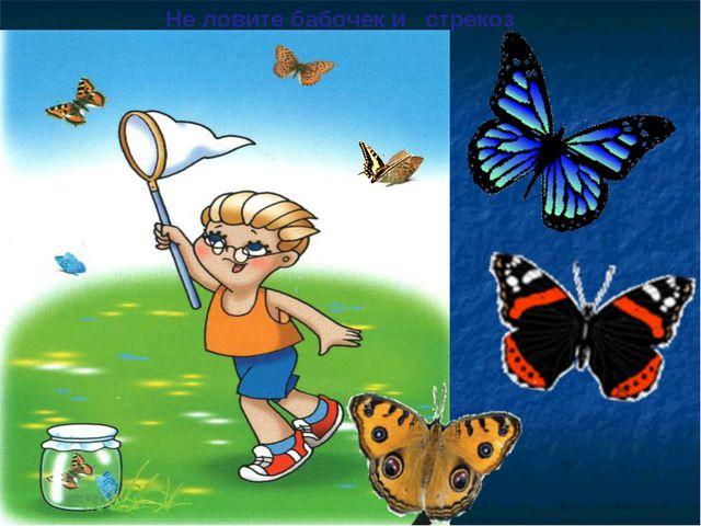 Не ловите бабочек и стрекоз