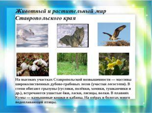 Животный и растительный мир Ставропольского края На высоких участках Ставропо