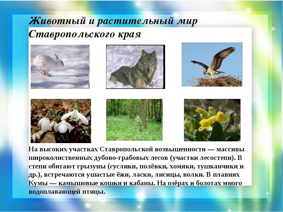 Животный и растительный мир Ставропольского края На высоких участках Ставропо...