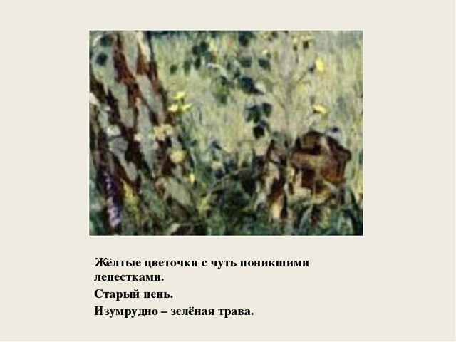 Жёлтые цветочки с чуть поникшими лепестками. Старый пень. Изумрудно – зелёная...