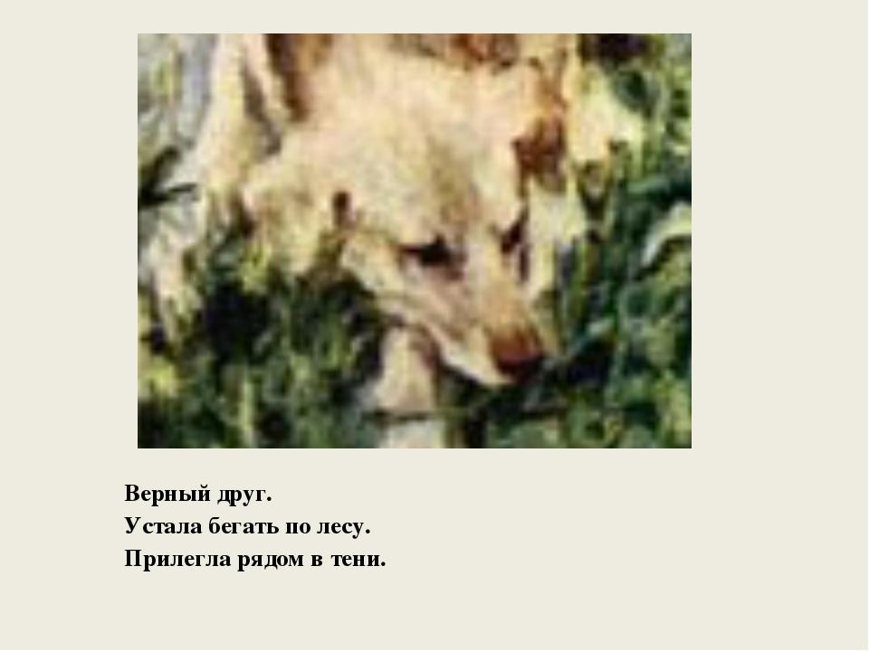 Верный друг. Устала бегать по лесу. Прилегла рядом в тени.