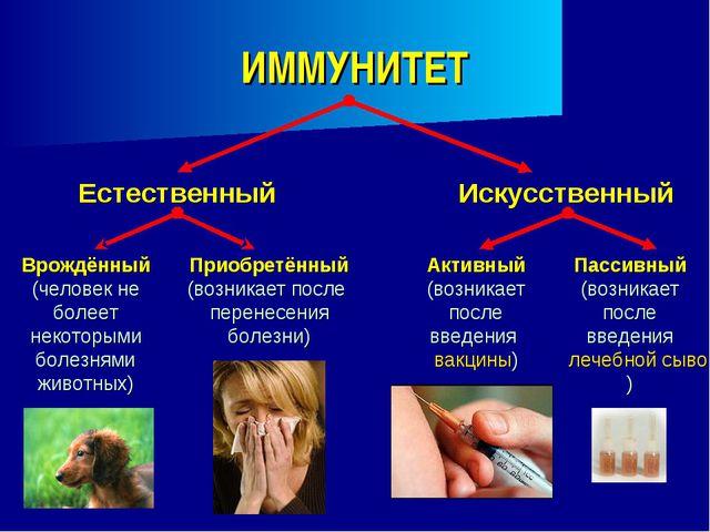 ИММУНИТЕТ Естественный Врождённый (человек не болеет некоторыми болезнями жив...