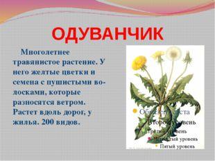 ОДУВАНЧИК Многолетнее травянистое растение. У него желтые цветки и семена с п