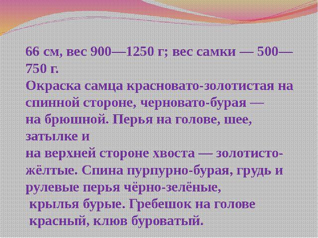 Пету́х —небольшая птица. Длина самца 66 см, вес 900—1250 г; вес самки — 500—7...
