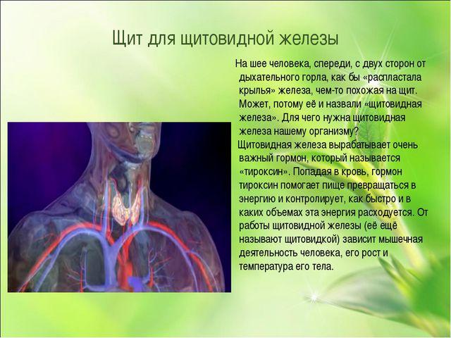 Щит для щитовидной железы На шее человека, спереди, с двух сторон от дыхатель...