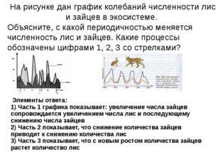 На рисунке дан график колебаний численности лис и зайцев в экосистеме. Объяс
