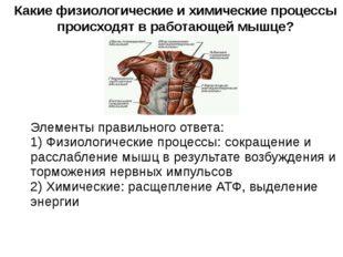 Какие физиологические и химические процессы происходят в работающей мышце? Э