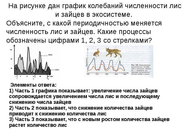 На рисунке дан график колебаний численности лис и зайцев в экосистеме. Объяс...