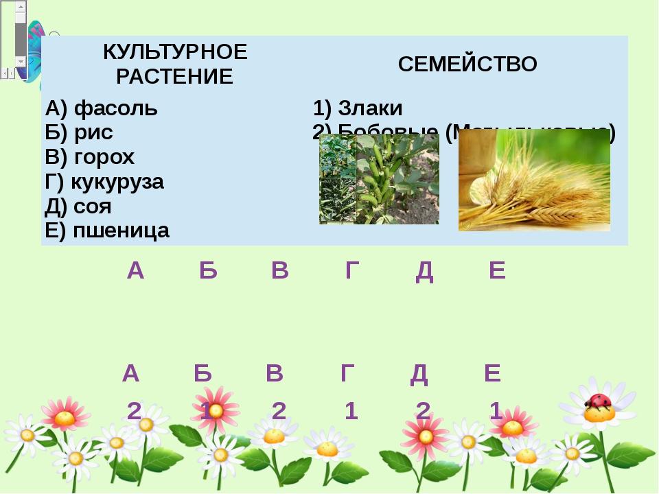 КУЛЬТУРНОЕ РАСТЕНИЕ СЕМЕЙСТВО А) фасоль Б) рис В) горох Г) кукуруза Д) с...