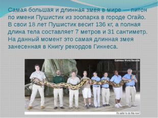 Самая большая и длинная змея в мире — питон по имени Пушистик из зоопарка в г