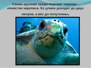 Самая крупная среди морских черепах - кожистая черепаха. Ее длина доходит до