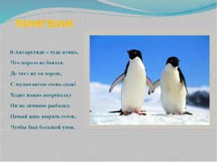 пингвин В Антарктиде – чудо птица, Что мороза не боится. До чего же он хорош,