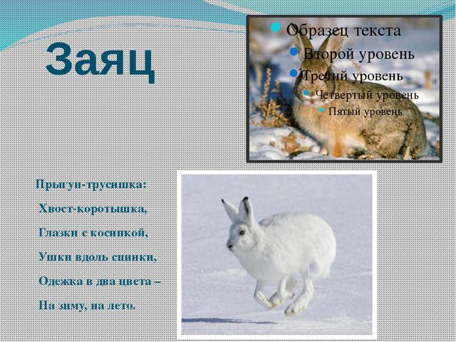 Заяц Прыгун-трусишка: Хвост-коротышка, Глазки с косинкой, Ушки вдоль спинки,...