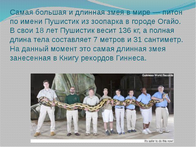 Самая большая и длинная змея в мире — питон по имени Пушистик из зоопарка в г...
