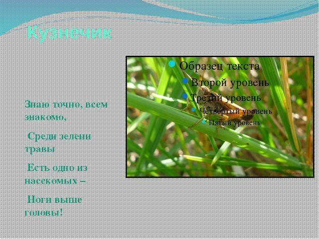 Кузнечик Знаю точно, всем знакомо, Среди зелени травы Есть одно из насекомых...