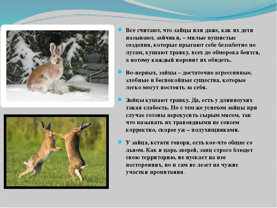 Все считают, что зайцы или даже, как их дети называют, зайчики, – милые пуши...