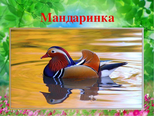 Мандаринка
