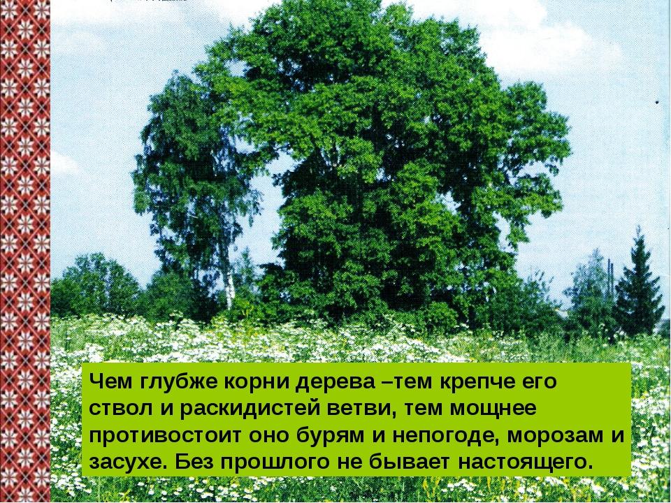 Чем глубже корни дерева –тем крепче его ствол и раскидистей ветви, тем мощнее...