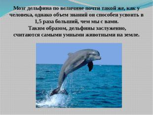 Мозг дельфина по величине почти такой же, как у человека, однако объем знаний