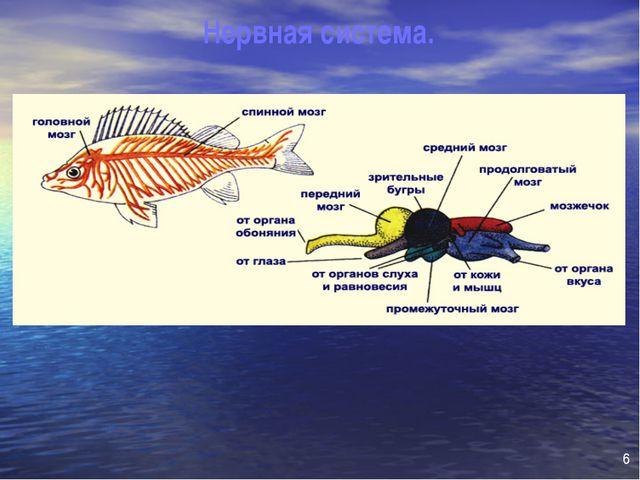 Нервная система. 6