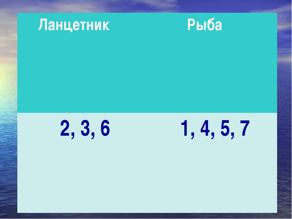 Ланцетник Рыба 2, 3, 61, 4, 5, 7