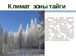 Климат зоны тайги Климат в тайге суровый. Зима продолжительная и холодная, в