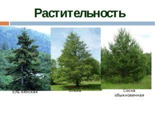 Животный мир тайги так же разнообразен, как и растительный. Наряду с таёжным