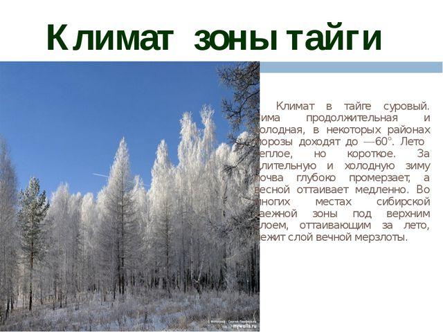 Климат зоны тайги Климат в тайге суровый. Зима продолжительная и холодная, в...