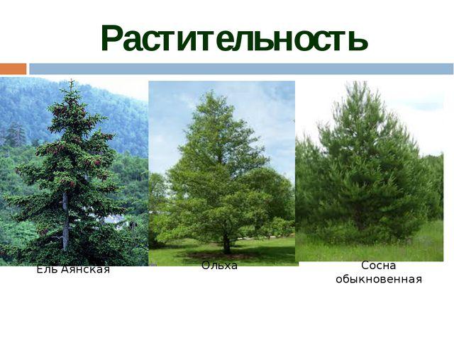 Животный мир тайги так же разнообразен, как и растительный. Наряду с таёжным...