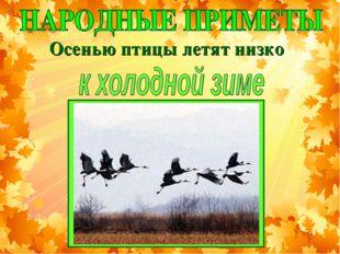 Осенью птицы летят низко