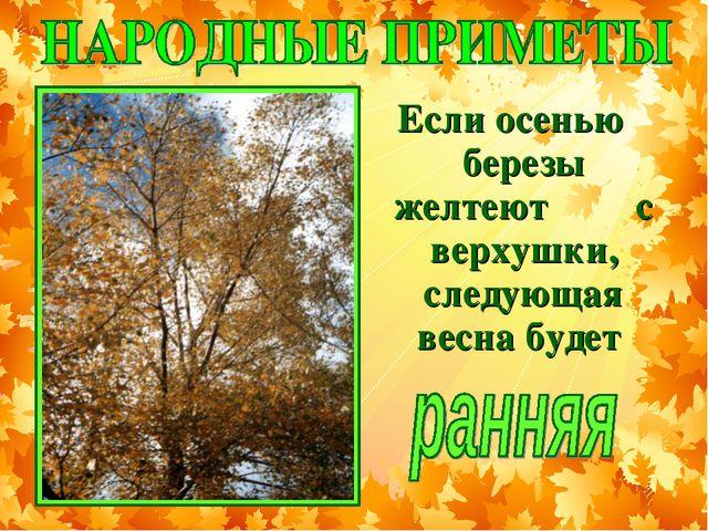 Если осенью березы желтеют с верхушки, следующая весна будет