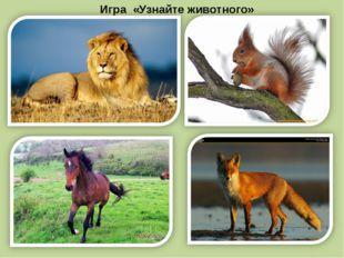 Игра «Узнайте животного»