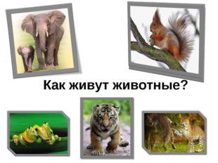 Как живут животные?