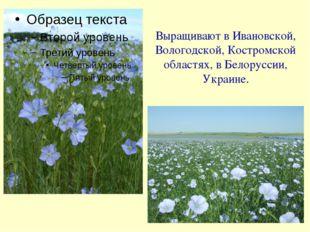Выращивают в Ивановской, Вологодской, Костромской областях, в Белоруссии, Укр