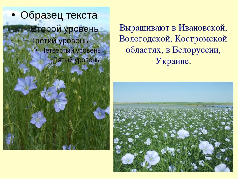 Выращивают в Ивановской, Вологодской, Костромской областях, в Белоруссии, Укр...
