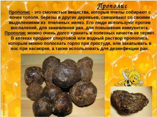 Прополис Прополис - это смолистые вещества, которые пчелы собирают с почек т